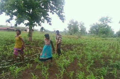 म.प्र. में बेहतर सिंचाई सुविधा ने बदल दी किसानों की जिंदगी